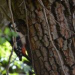 05. Von Vogeleltern, einem Telefonat und Rundbriefen, Geschichten aus der Naturschule