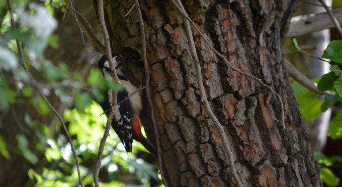 You are currently viewing 05. Von Vogeleltern, einem Telefonat und Rundbriefen, Geschichten aus der Naturschule