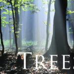 04. Trees, Geschichten aus der Naturschule