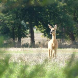 Wildnispädagogik und Naturfotografie