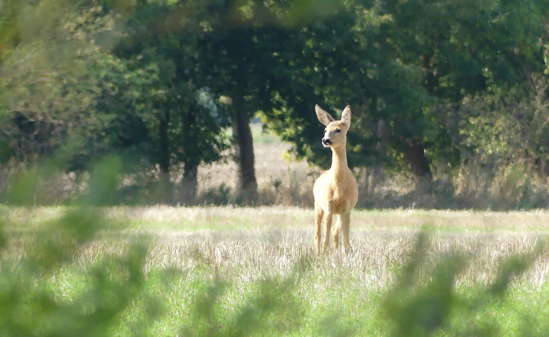 Foto Online-Kurs WP und Naturfotografie